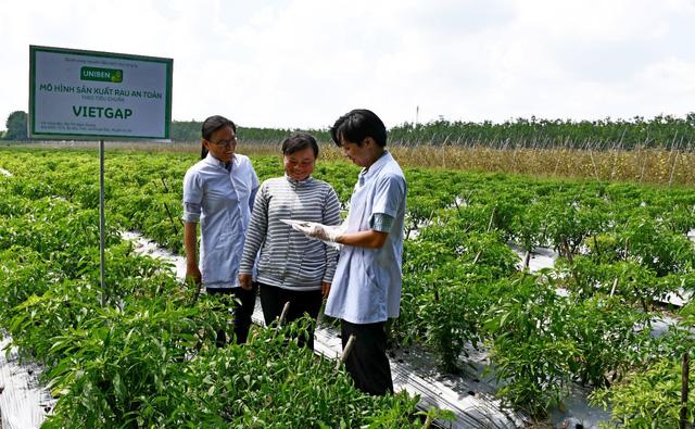 Mô hình sản xuất rau sạch