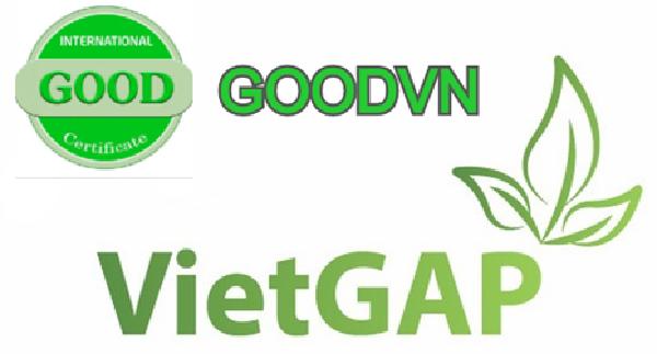 Tổ chức chứng nhận đạt tiêu chuẩn VietGAP - GOODVN